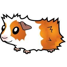 Cartoon guinea pig